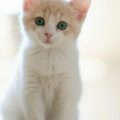 cat01 120x120 - ねこ🐈[写真]の高画質スマホ壁紙36枚 [iPhone&Androidに対応]