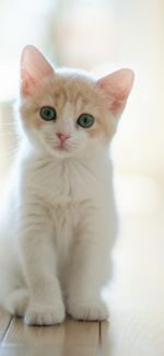 cat01 150x325 - ねこ🐈[写真]の高画質スマホ壁紙36枚 [iPhone&Androidに対応]