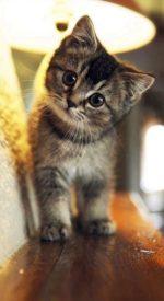 cat08 150x275 - ねこ🐈[写真]の高画質スマホ壁紙36枚 [iPhone&Androidに対応]