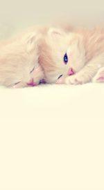 cat09 150x275 - ねこ🐈[写真]の高画質スマホ壁紙36枚 [iPhone&Androidに対応]