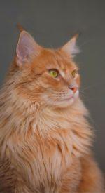 cat15 150x275 - ねこ🐈[写真]の高画質スマホ壁紙36枚 [iPhone&Androidに対応]