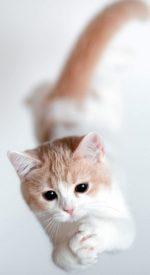 cat16 150x275 - ねこ🐈[写真]の高画質スマホ壁紙36枚 [iPhone&Androidに対応]