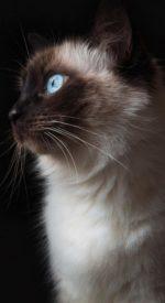 cat18 150x275 - ねこ🐈[写真]の高画質スマホ壁紙36枚 [iPhone&Androidに対応]