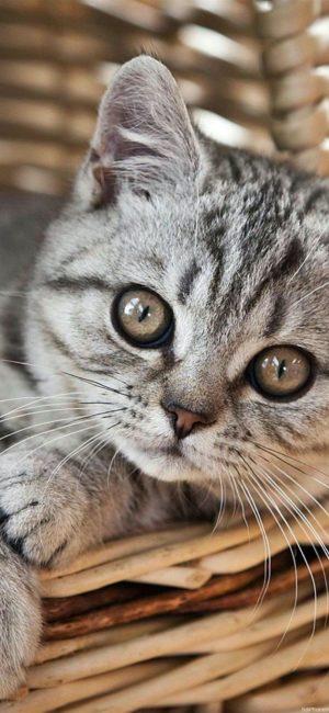 cat24 300x650 - ねこ🐈[写真]の高画質スマホ壁紙36枚 [iPhone&Androidに対応]