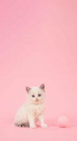 cat26 150x275 - ねこ🐈[写真]の高画質スマホ壁紙36枚 [iPhone&Androidに対応]