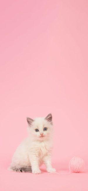 cat26 300x650 - ねこ🐈[写真]の高画質スマホ壁紙36枚 [iPhone&Androidに対応]
