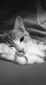 cat28 150x275 - ねこ🐈[写真]の高画質スマホ壁紙36枚 [iPhone&Androidに対応]