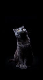 cat31 150x275 - ねこ🐈[写真]の高画質スマホ壁紙36枚 [iPhone&Androidに対応]