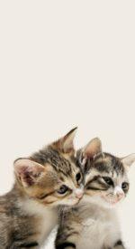 cat35 150x275 - ねこ🐈[写真]の高画質スマホ壁紙36枚 [iPhone&Androidに対応]